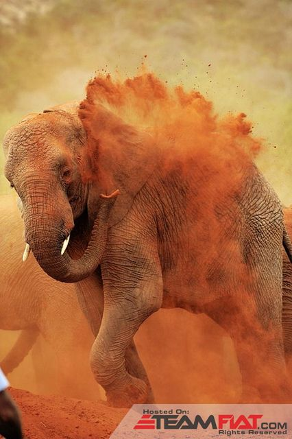 africa-animal-beauty-dust-elephant-Favim.com-455441_large.jpg