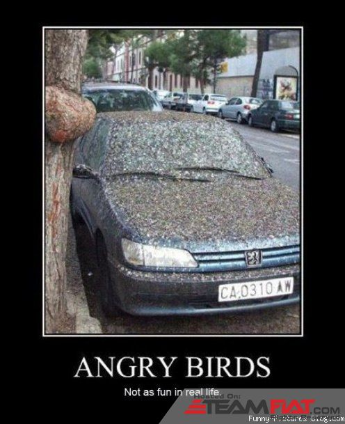 angry_birds_funny.jpg
