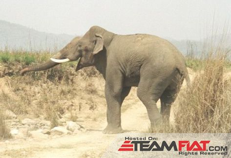 Asian_Elephant_in_Corbett_National_Park.jpg