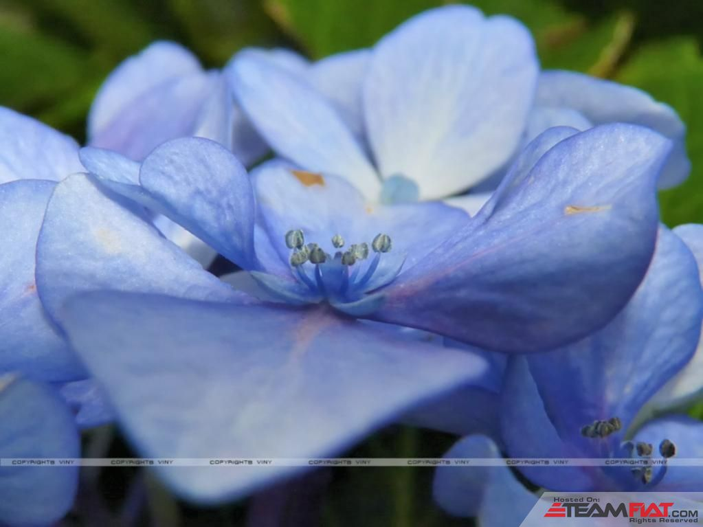Blue-flower-real-macro.jpg