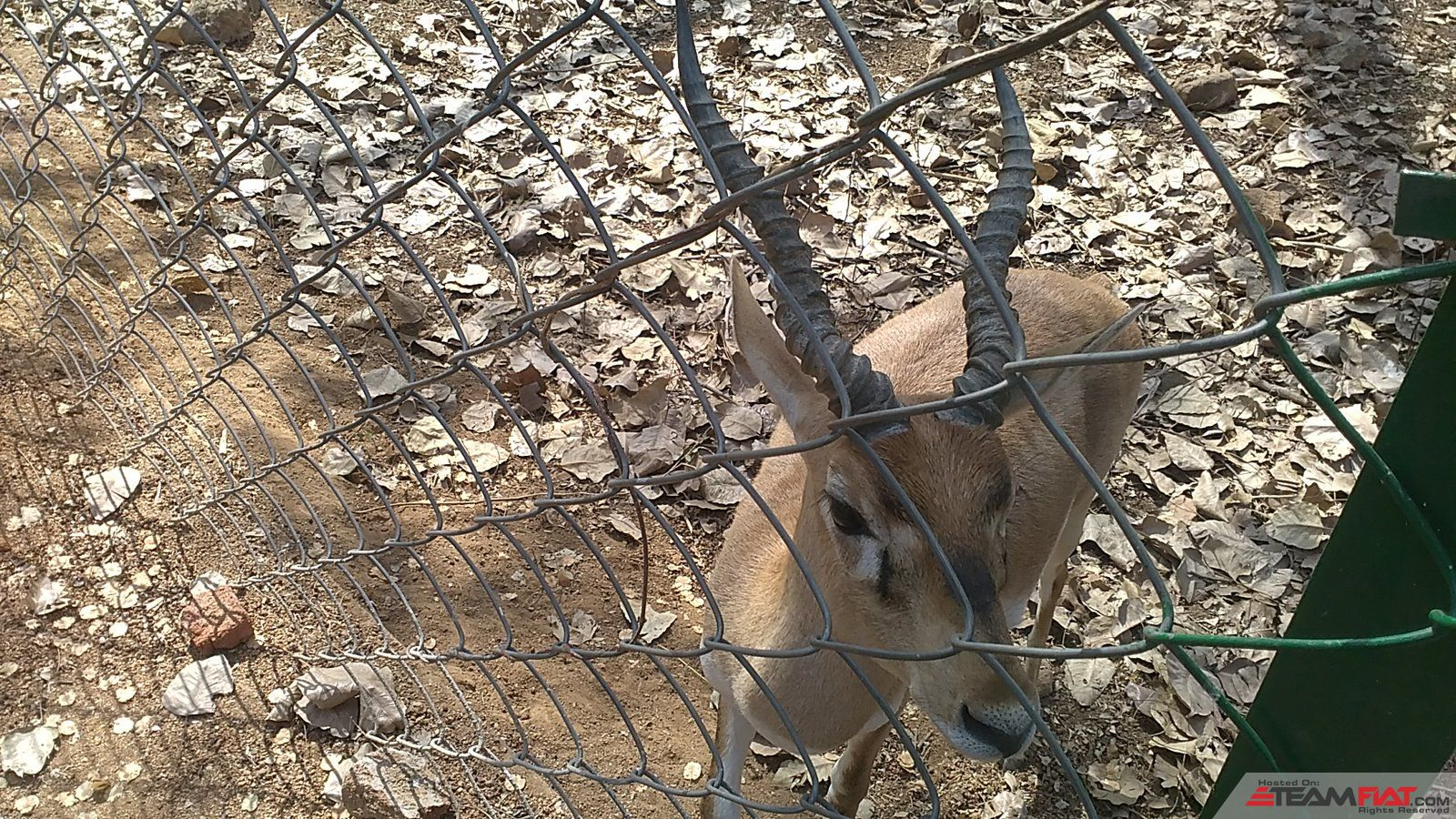 Deer in fence.jpg