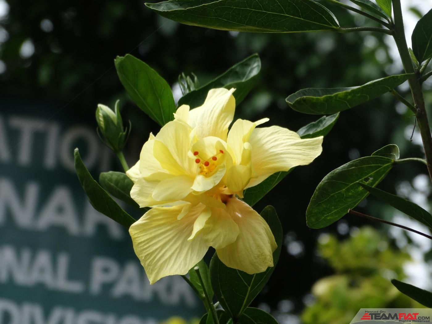 Flower at Lakham Falls.jpg