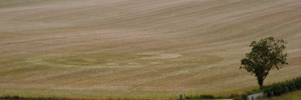harvested crop circle 5.jpg