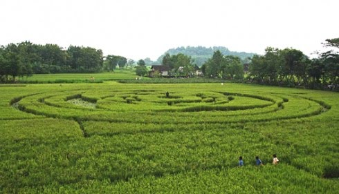 Indonesia-crop-circles.jpg