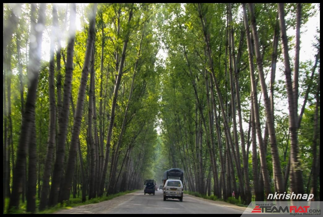 Kashmir - Green Tunnel.jpg