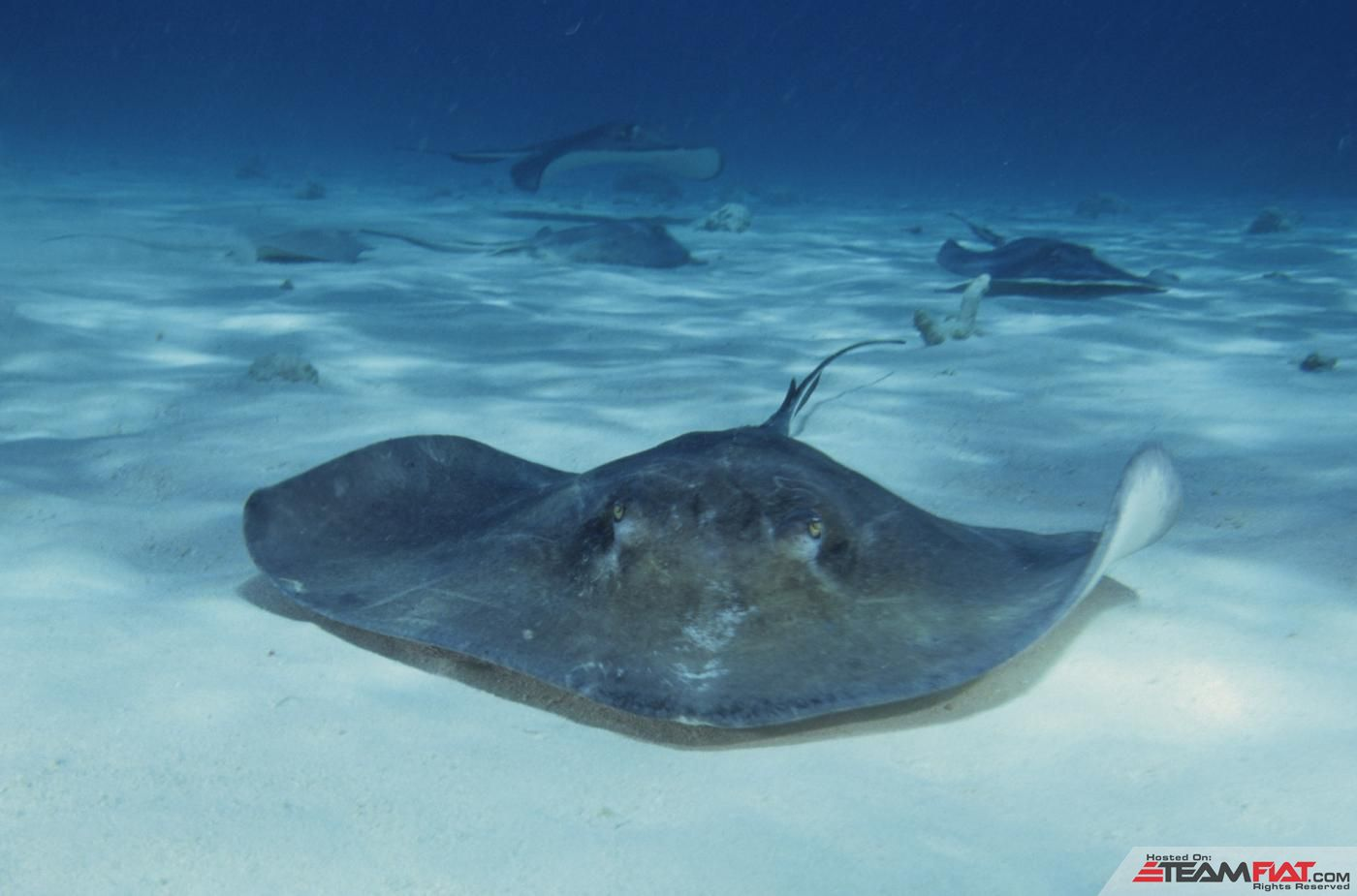Real Stingray.jpg